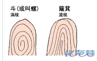 你知道手指上的斗和簸箕真正的含义是什么吗?(转)
