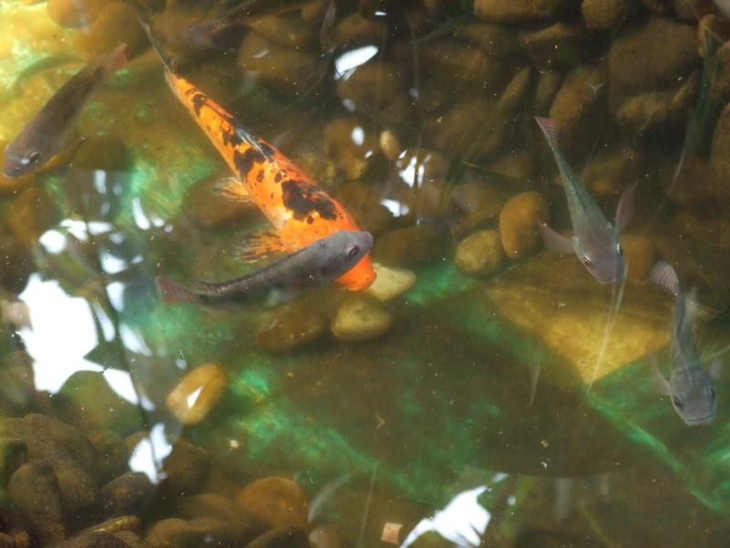 怎样才知道水中是否有鱼? -   红杏 - 红杏
